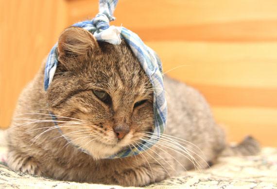 bad pet sitter injured cat