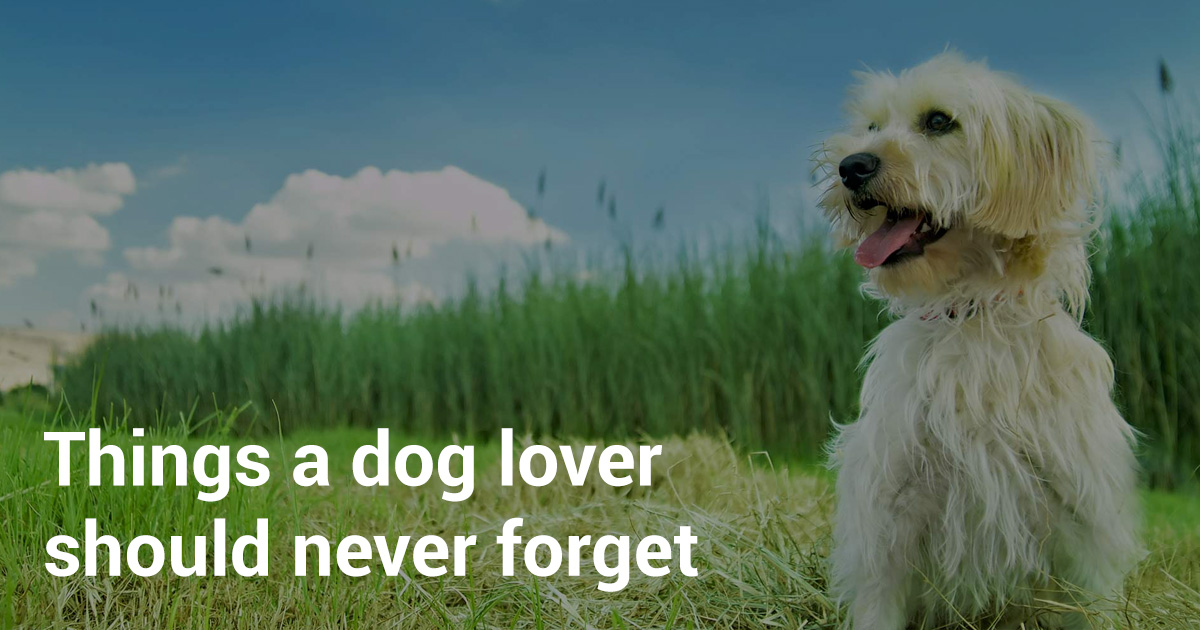 A dog lover's story
