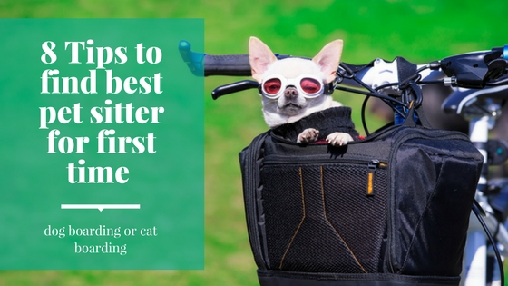 8 tips to find best pet sitter for first time