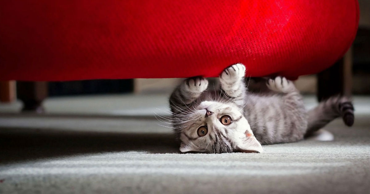 5 tips on how to make your cat love you more