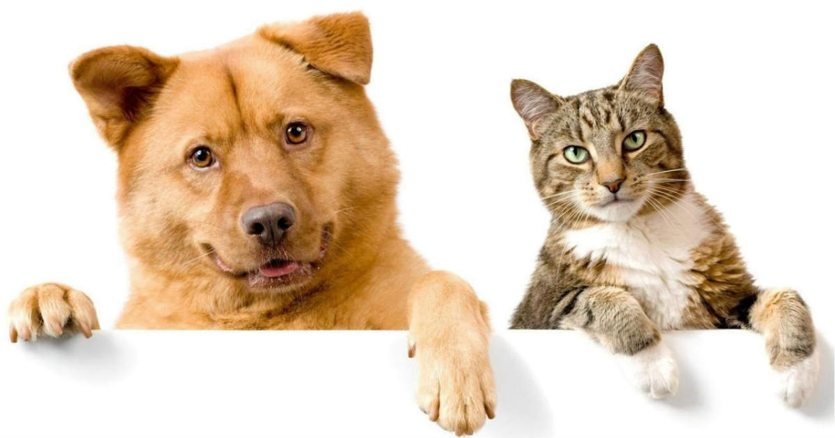 Tips On How To Make A Cat And Dog Become Friends