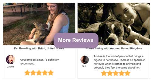 Dog boarding reviews