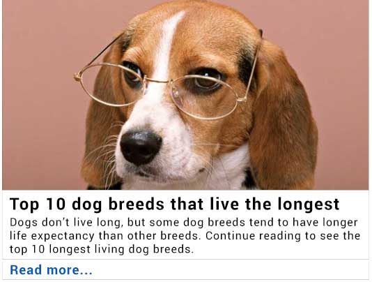 Top 10 breeds that live the longest
