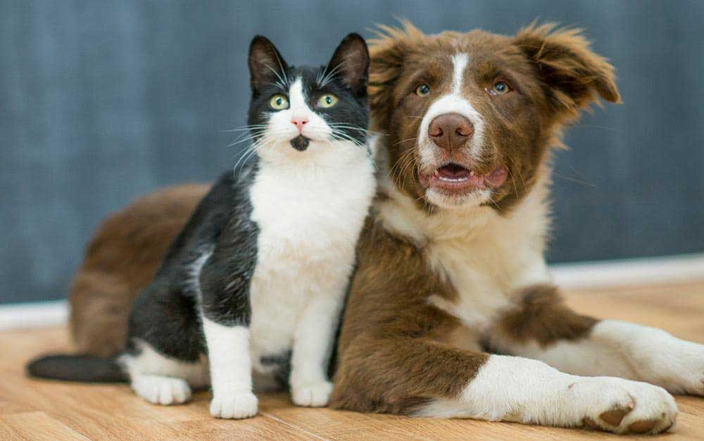First time owners: dogs or cats?