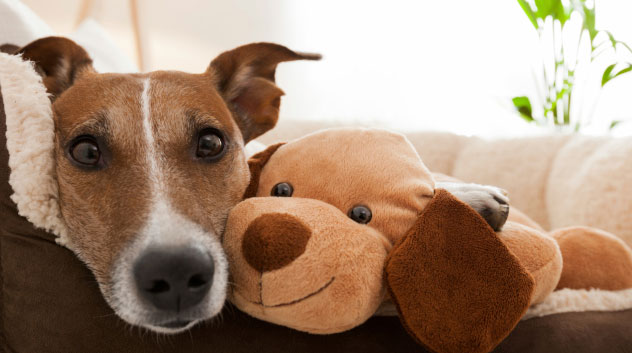 Top things to know before adopting a dog, cat or other pets