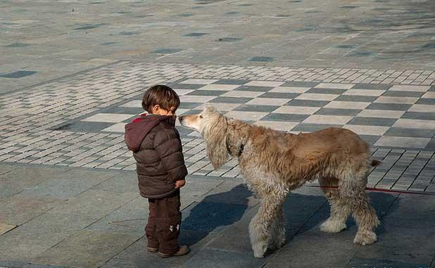 dog approach