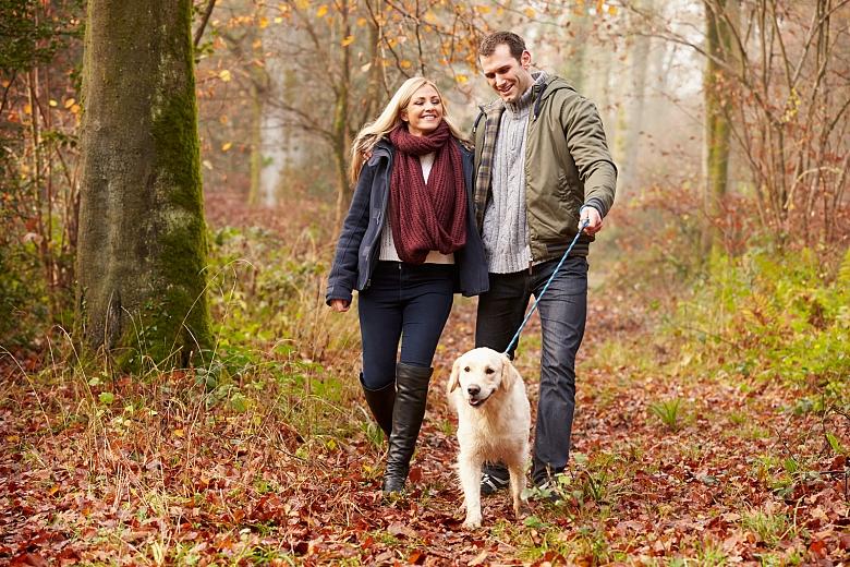dog couple walk