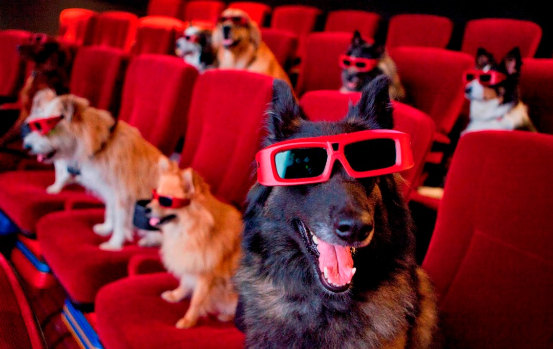 dog movie