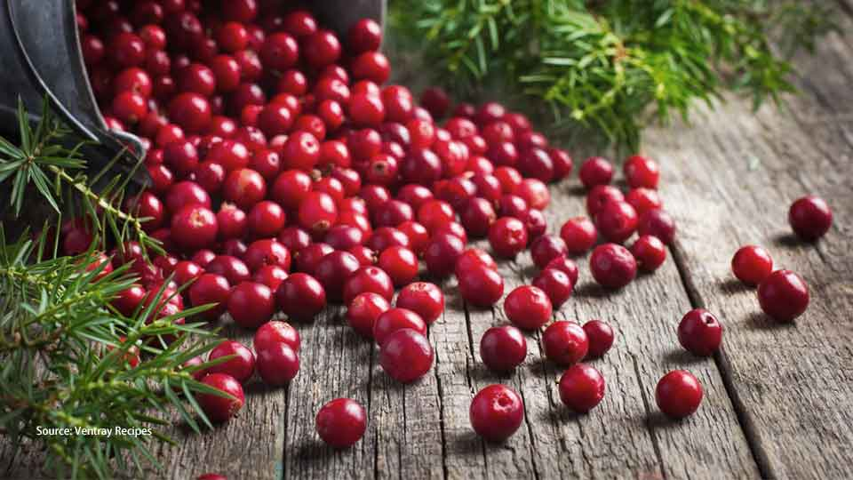 Foods that are safe for dogs cranberry