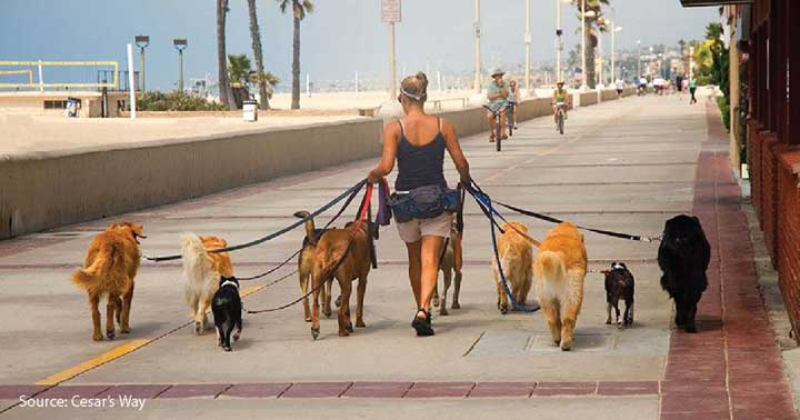 The wonderful statistics and facts behind dog walking