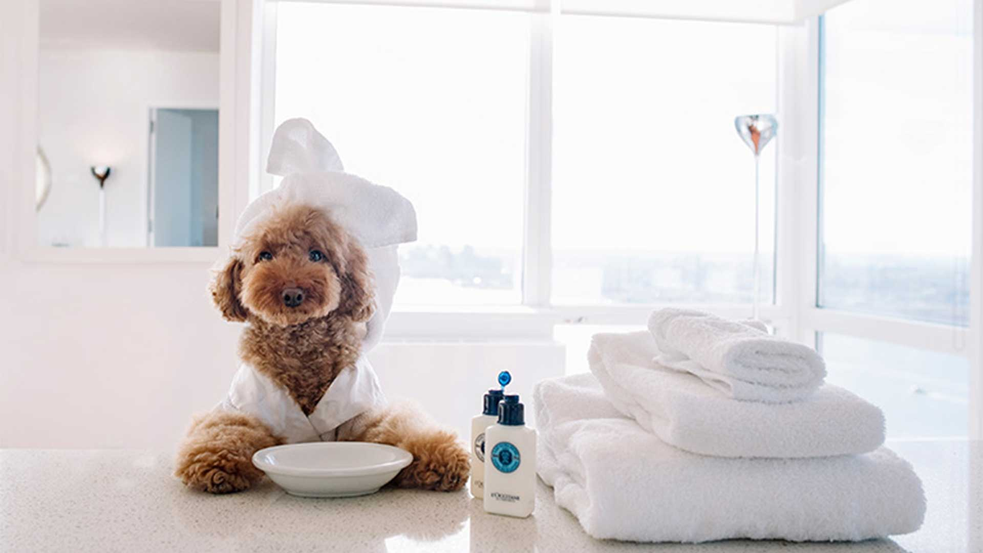 Image result for pet lovers blog