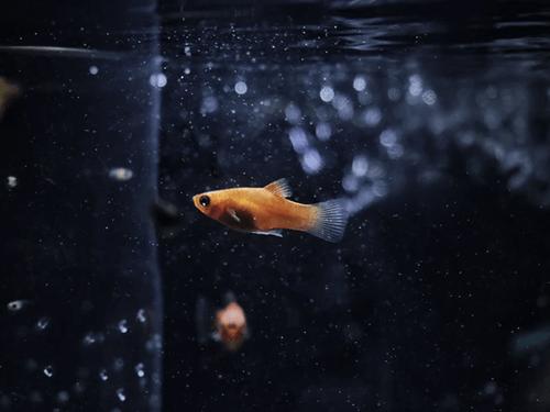 Low oxygen in a fish tank