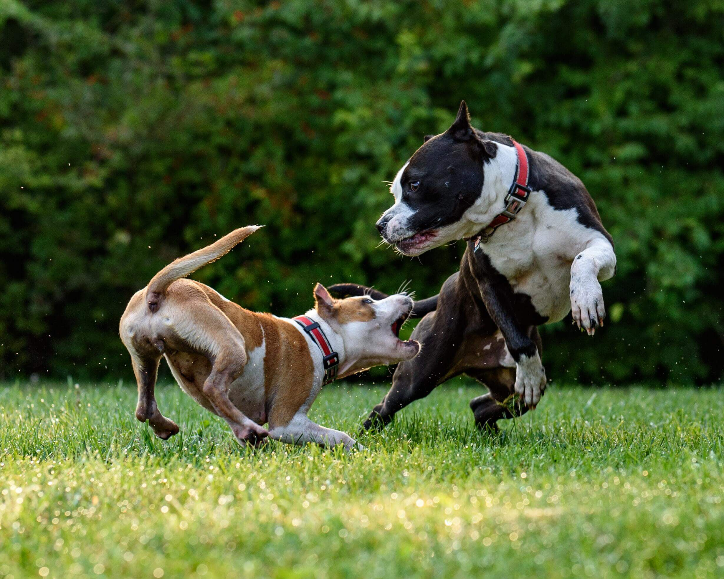 dog playing with each other