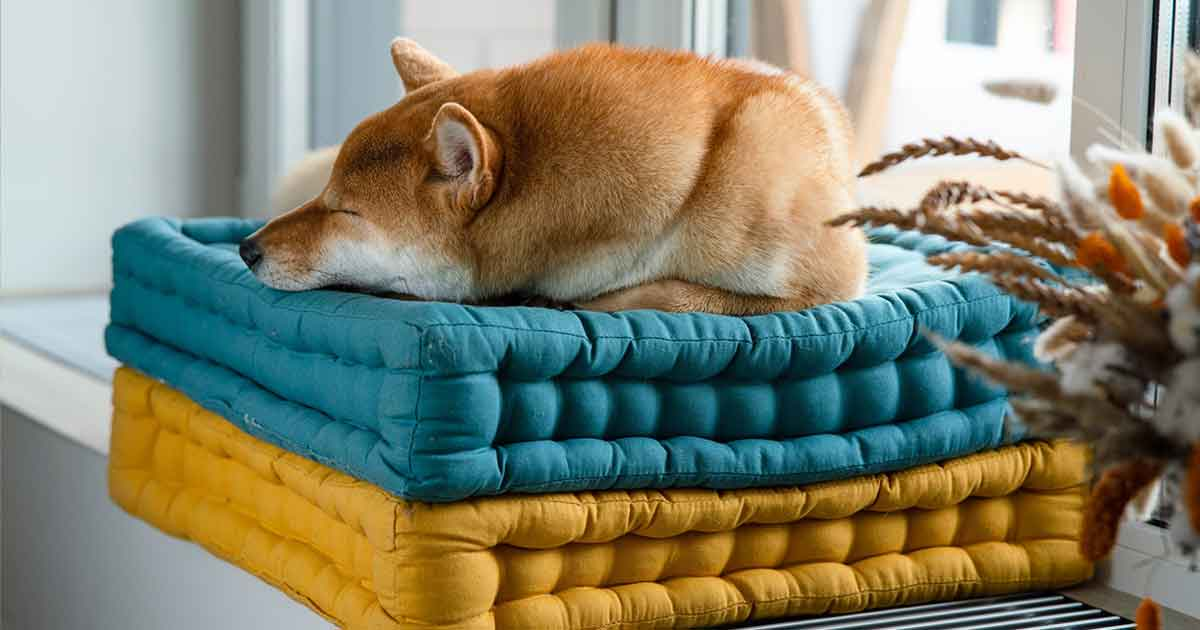 dog-comfort-zone-at-home