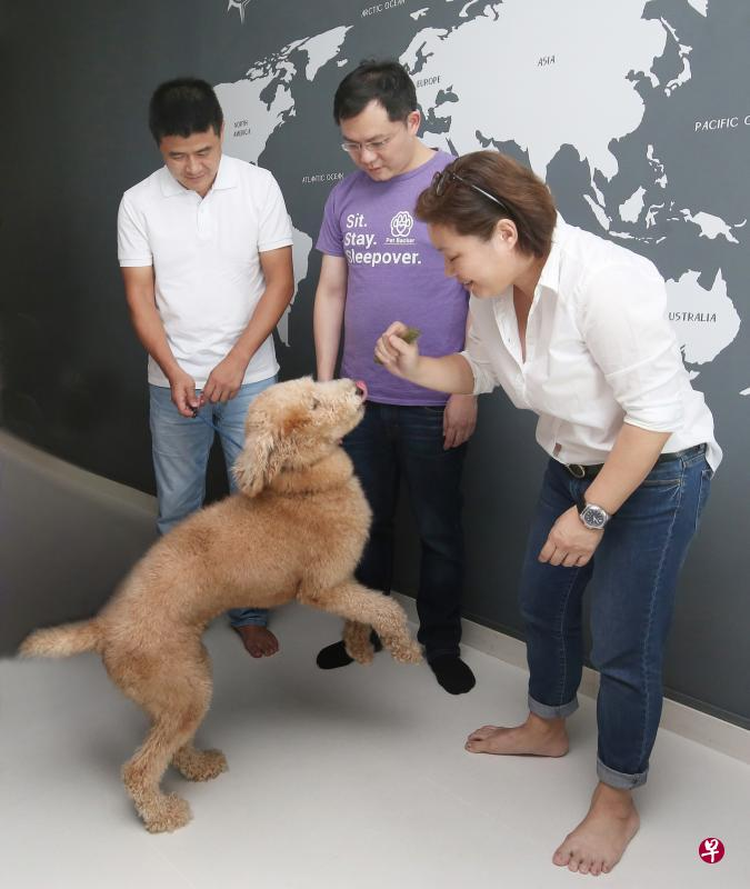zaobao petbacker singapore pet boarding platform news