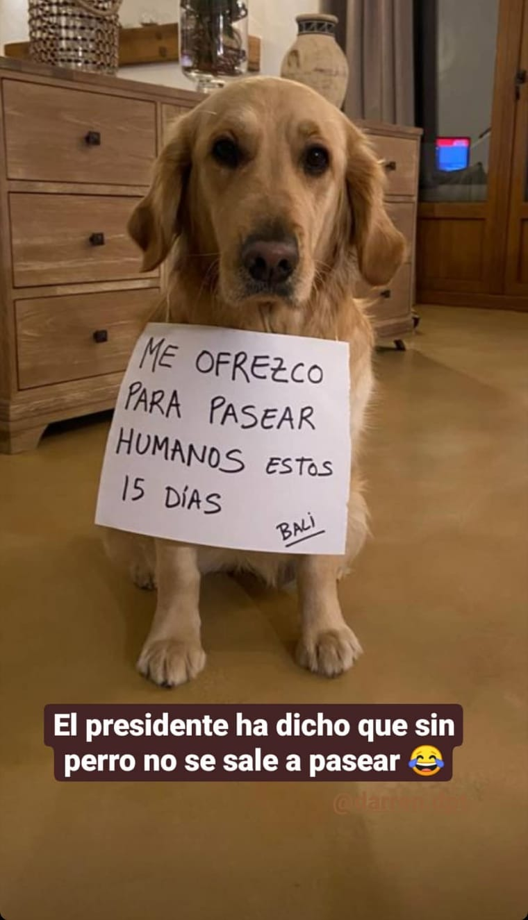 dog-for-rent-in-spain-for-dog-walks