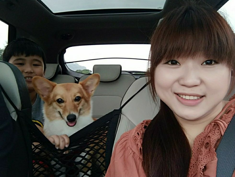 Pet Taxi Changhua City