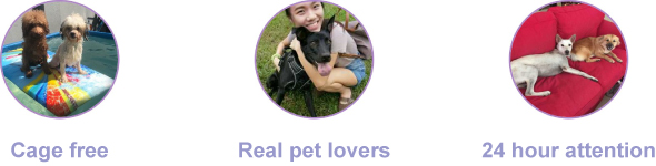 PetBacker Pet Lover