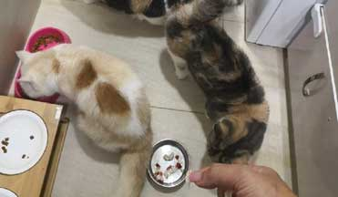 Pet House Sitting New Territories