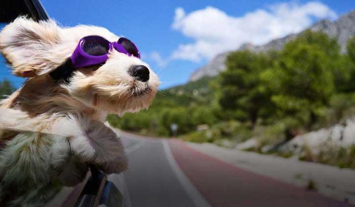 Pet Taxi PetBacker
