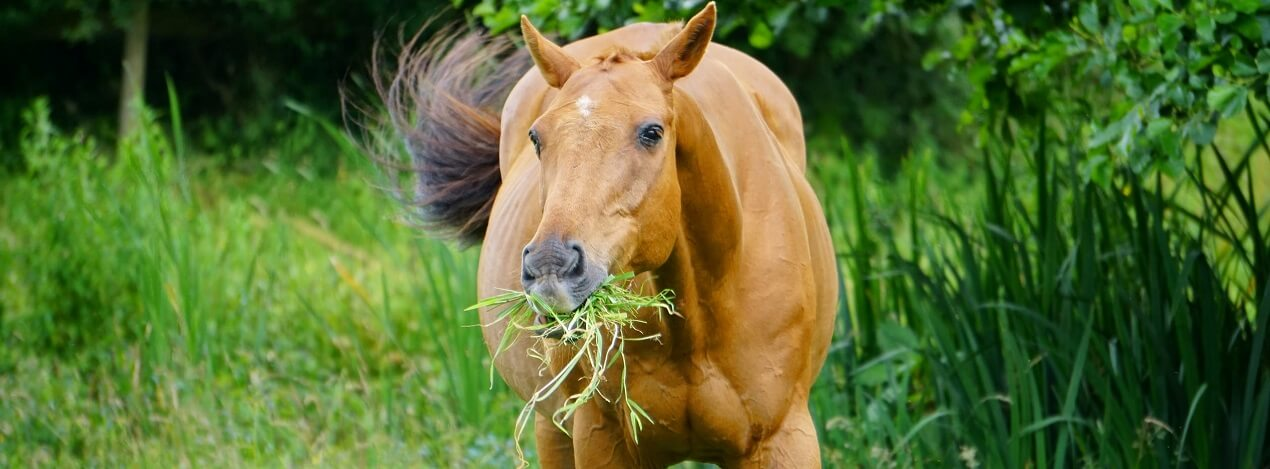 Complete Horse Feeding Guide