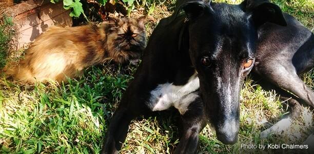 10 Reasons To Adopt A Greyhound   Pet Circle