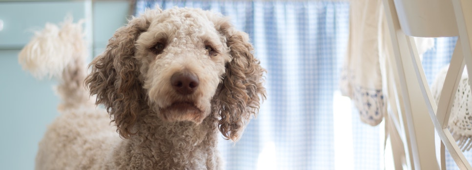 Yeast Infections In Dogs | Pet Circle