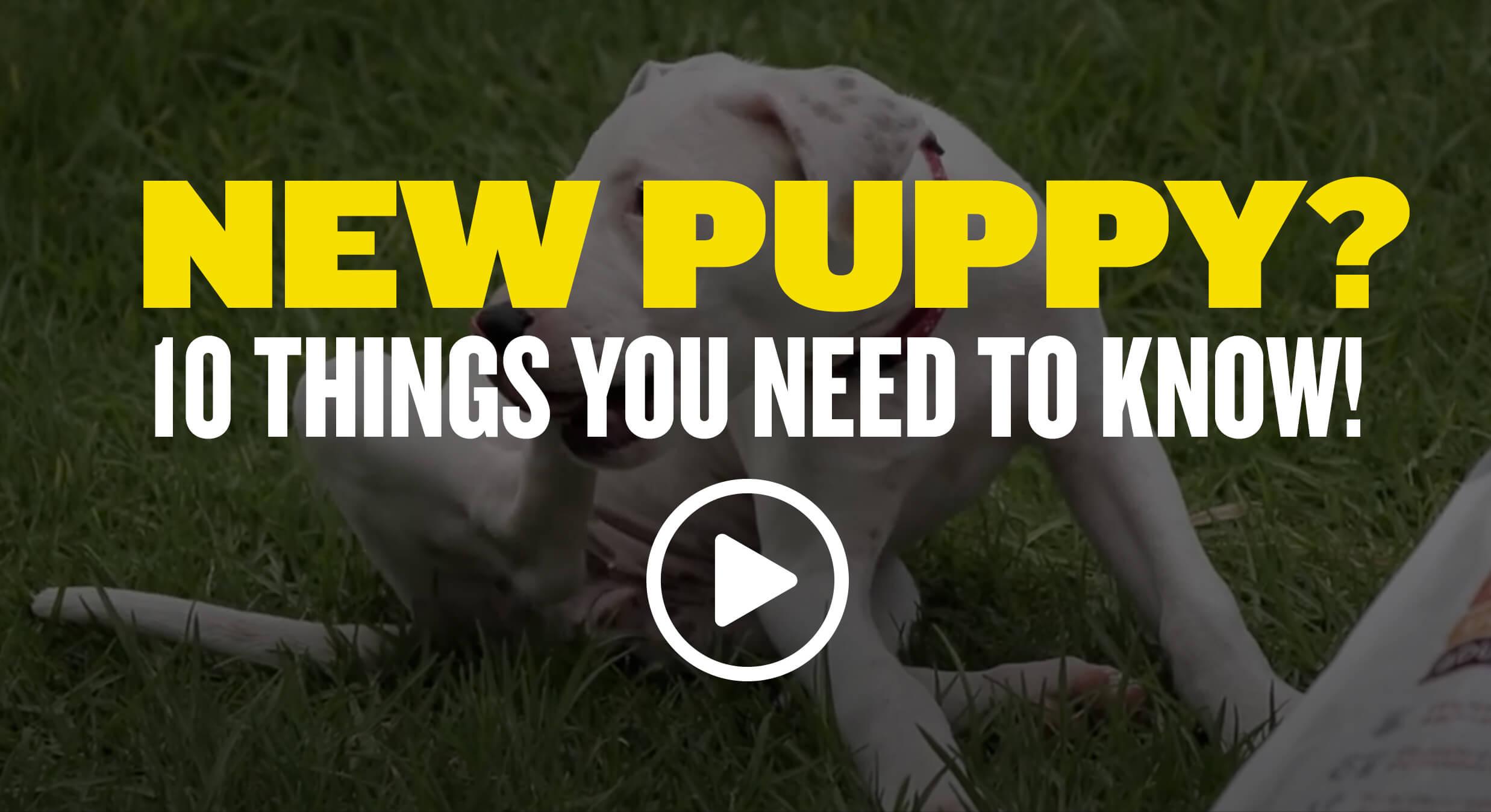 Better Puppy Bundle Unboxing