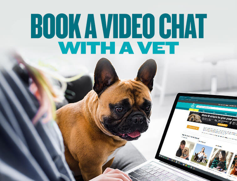 Book a video chat with a vet