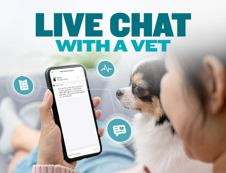 Live Chat with a vet