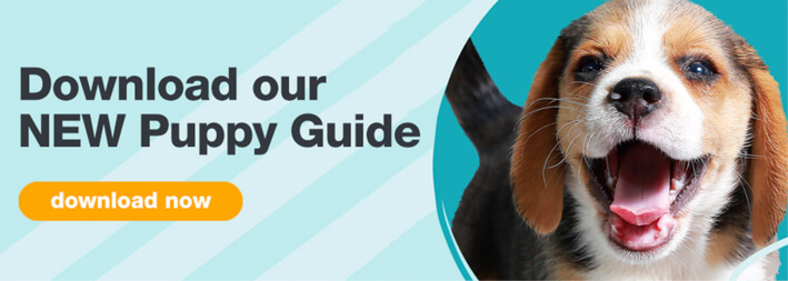 Download our NEW puppy guide