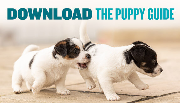 Download our new puppy parent guide