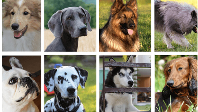 which dog breed is right for you