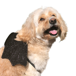 All For Paws Afp Halloween Bat Wings