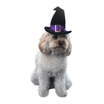 All For Paws Afp Halloween Witch Hat
