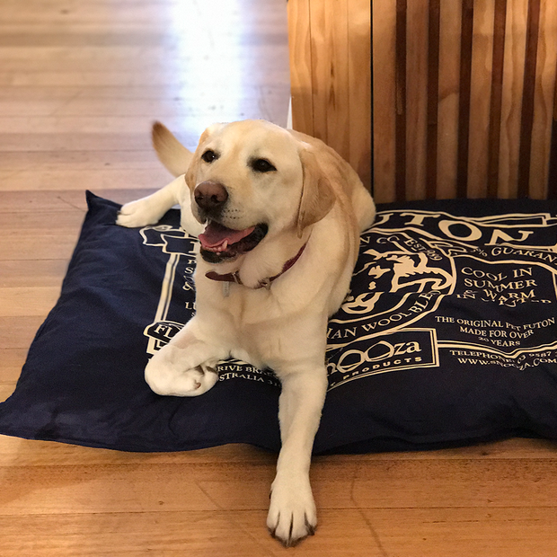 Snooza Pet Futon Mighty Blue