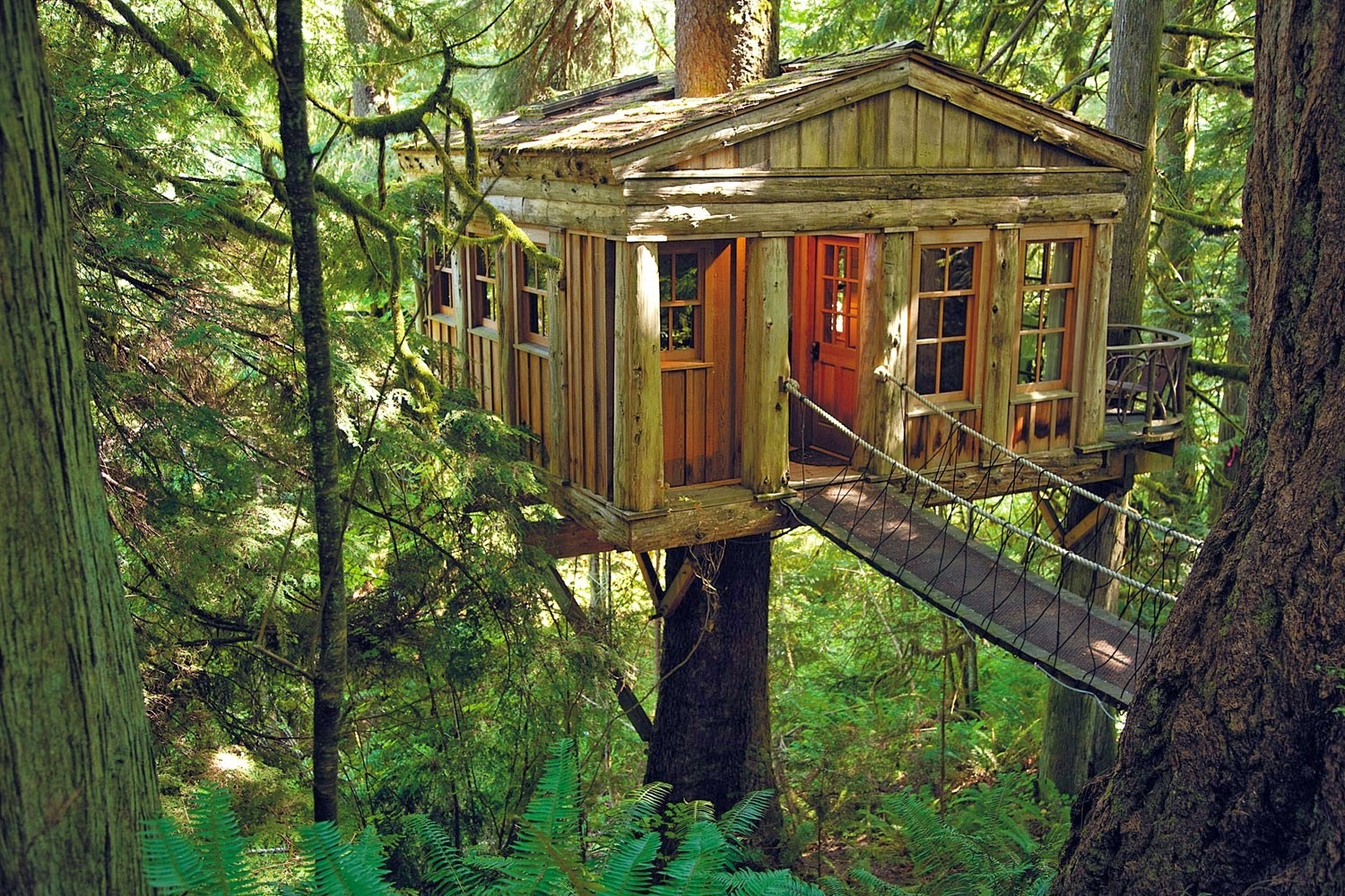 Dream tree house