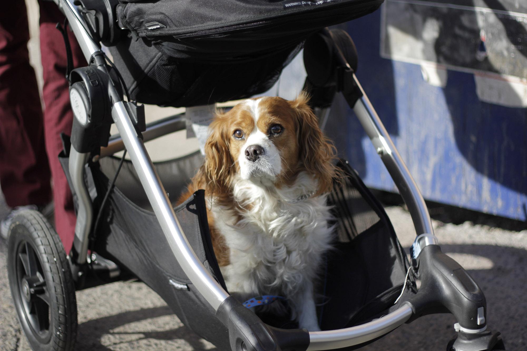 Minnesota Service Dog Laws