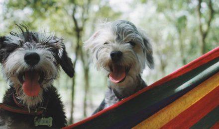 Senior pet emergency fund