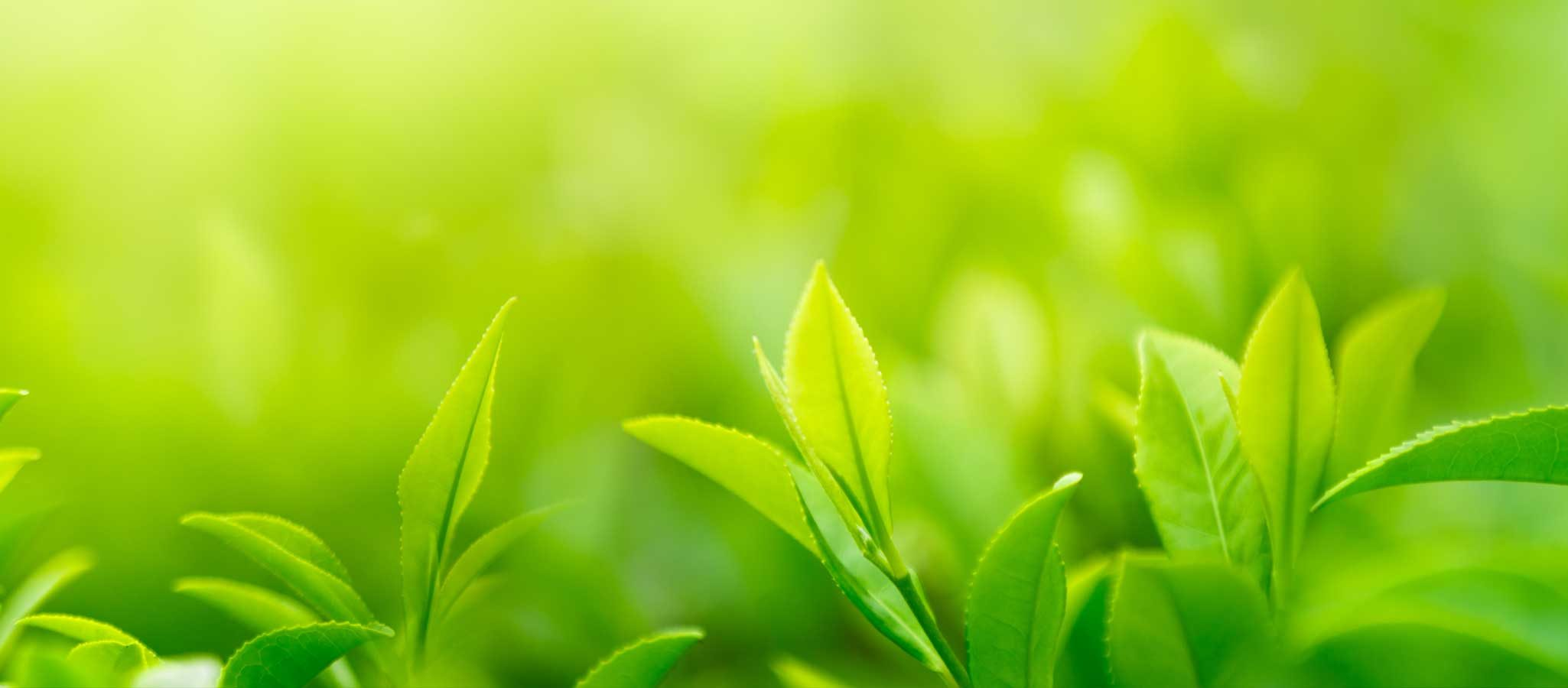 A close up photo of a verdant green plant in a wild field