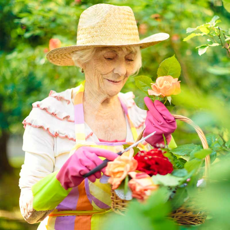 A senior woman tends to her flower garden