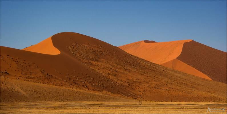 Dunes in the Namib-Naukluft Park