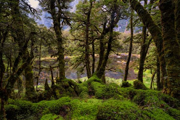 Mysterious Fiordland
