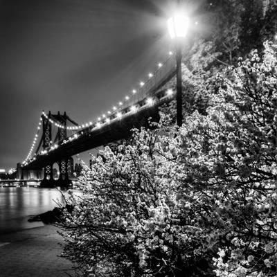 Bridge and blossoms at night