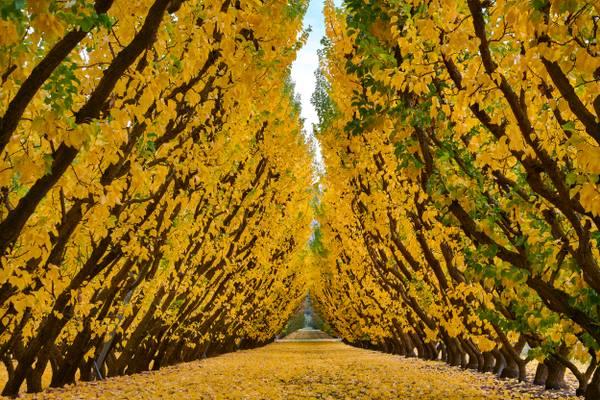 Jackson Orchards - Cromwell, New Zealand
