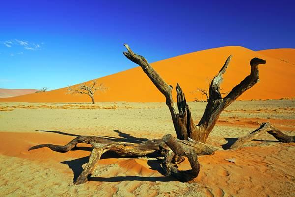 Dry trees in the desert, Dune 45 in the background, Sossusvlei, Namibia