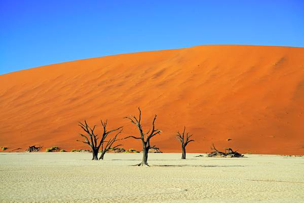 Gorgeous colours of Deadvlei, Namibia
