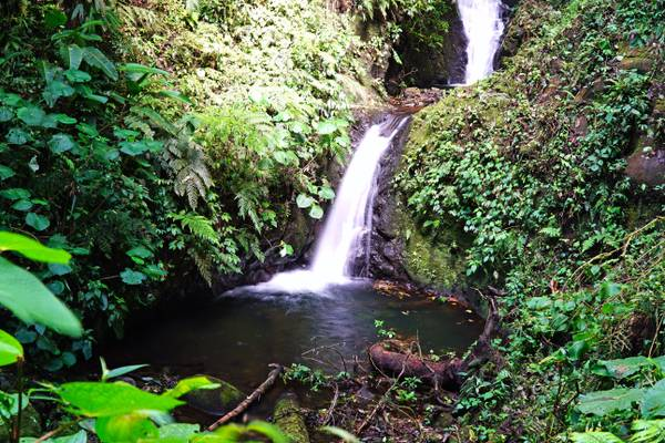 Santa Elena Cloud Forest, Monteverde