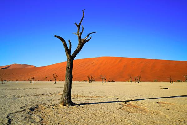 Might be on another planet! Deadvlei, Namibia