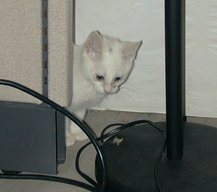 willow peeks from behind a cubicle section